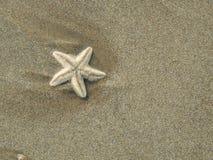 Liten sjöstjärna som ligger på sandsjösidastranden Royaltyfria Foton