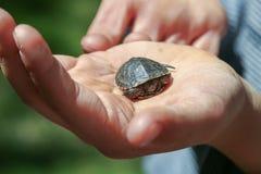Liten sköldpadda i en hand fotografering för bildbyråer