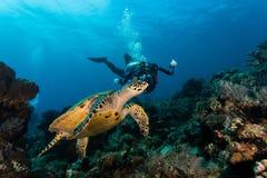 Liten sköldpadda och fotograf Arkivfoton