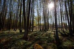 liten skog 2 Arkivbilder