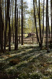liten skog 3 Royaltyfria Bilder