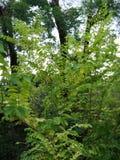 liten skog Arkivbild