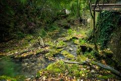 liten skogflod arkivbild