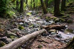 liten skogflod royaltyfria bilder