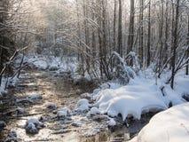 liten skogflod Royaltyfri Bild