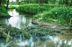 liten skogflod Royaltyfri Fotografi