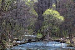 Liten skogflod för blått vatten royaltyfri foto