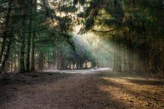 Liten skogröjning Fotografering för Bildbyråer
