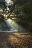 Liten skogröjning Arkivfoton