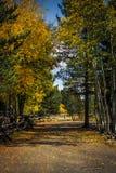 Liten skogväg som täckas av kulöra sidor Fotografering för Bildbyråer