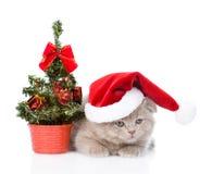 Liten skotsk katt med den röda santa hatten och julträdet Isolerat på vit Arkivbild