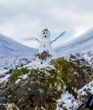 Liten snögubbe i den skotska Skotska högländerna Fotografering för Bildbyråer