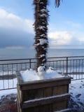 Liten snögubbe under palmträdet på snöig sjösidapromenad royaltyfri fotografi