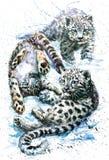 Liten snöleopard Royaltyfri Fotografi