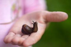 Liten snail på barnhanden Arkivfoto