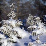 liten snowtree Arkivfoton