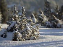 liten snowtree Arkivbild