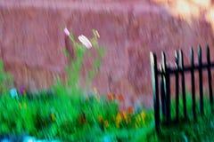 Liten sommarträdgård - impressionistinställning Arkivfoto