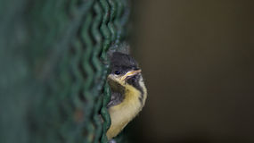liten sparrow royaltyfri foto