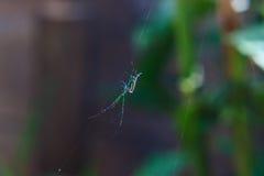 liten spindel Fotografering för Bildbyråer