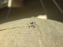 liten spindel Royaltyfri Foto