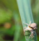 liten spindel Arkivfoton