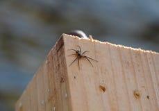 liten spindel Arkivfoto