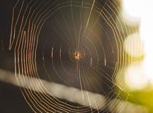 Liten spindel i dess rengöringsduk Arkivfoto