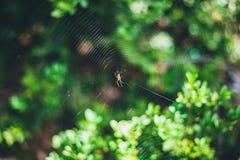Liten spindel på dess spindelrengöringsduk med suddiga gröna sidor på bakgrunden arkivbilder