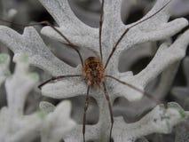 Liten spindel på ett vitt blad royaltyfri foto