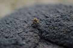 Liten spindelkrypning Fotografering för Bildbyråer