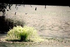 Liten springbrunn i en sjö arkivfoton