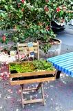 Liten ställning i en blommamarknad Arkivfoto
