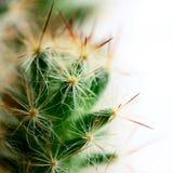 liten stor kaktus Arkivfoton