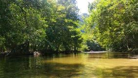 Liten ström längs skogen med att kanota royaltyfri fotografi