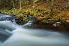Liten ström med en lång exponering under nedgången i den bayerska skogen, Tyskland Arkivbild
