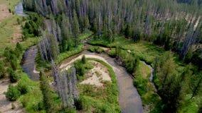 Liten strimmablytak till och med en Idaho skog i sommaren arkivfilmer