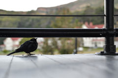 Liten svart fågel under en räcke Royaltyfria Foton