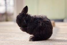 Liten svart kanin Arkivfoton