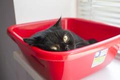 Liten svart katt som kopplar av i den röda asken Royaltyfri Bild