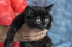 Liten svart kattunge i händerna av mannen royaltyfri bild