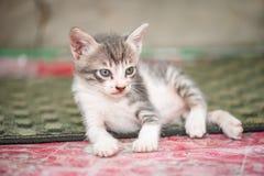 Liten svart vit och gullig kattunge Arkivfoto