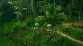 Liten terrass som ska kopplas av mellan risfälten royaltyfria bilder