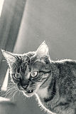 liten tiger Royaltyfri Fotografi