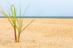 Liten tofs av gräs i sanden på Martha's Vineyard, Massachusetts royaltyfria foton