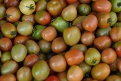 liten tomat Arkivbild