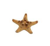 Liten torkad sjöstjärna Arkivbilder