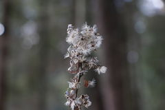 Liten torr grеy blomma Arkivfoto