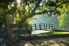 Liten träbro på första solstrålar på morgonen royaltyfri bild