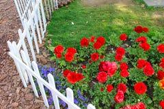 Liten trädgård av den röda blomman Arkivbilder